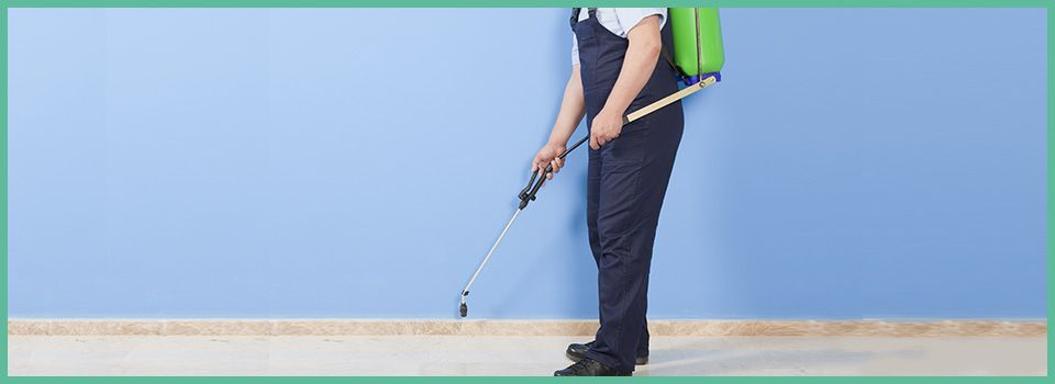 Frequently Asked Questions about Pest Control